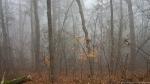 HSNP Short Cut Trail Autumn Fog