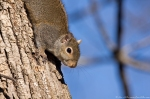 HSNP Tufa Terrace Trail Squirrel