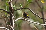 HSNP Short Cut Trail Yellow Rumped Warbler
