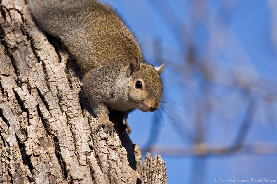 HSNP Tufa Terrace Trail Squirrel