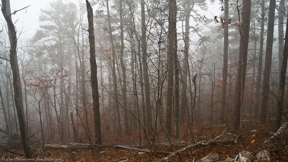 HSNP Hot Springs Mountain Trail Autumn Fog