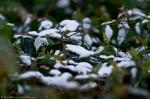 HSNP Tufa Terrace Trail Snow on Bush