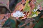 HSNP Dead Chief Trail Snow on Autumn Leaves