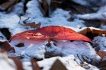 HSNP Hot Springs Mountain Trail Autumn Leaf Snow