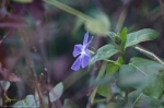 HSNP Fountain Trail Winter Periwinkle