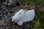 HSNP Hot Springs Mountain Trail Winter Frost Flower