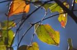 HSNP Lower Dogwood Trail Winter Leaves