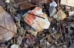 HSNP Floral Trail Winter Rock