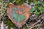 HSNP Fountain Trail I Love Ireland Leaf