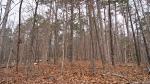 HSNP Lower Dogwood Trail Winter