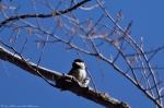 HSNP West Mt Canyon Trail Carolina Chickadee
