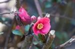 HSNP Tufa Terrace Trail Pink Azalea