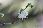 HSNP Tufa Terrace Trail Flowering Bush
