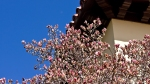 HSNP Bath House Row Saucer Magnolia