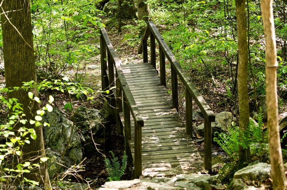 LCSP Falls Branch Trail Bridge