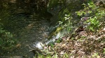LCSP Falls Branch Trail Small Waterfall
