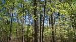 Cedar Glades Park Arkansas Blue Trail Spring