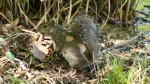 LCSP Falls Branch Trail Squirrel