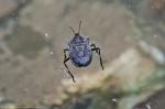 Cedar Glades Park Blue Trail Beetle