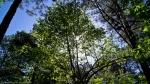 Cedar Glades Park Black Trail Spring Canopy