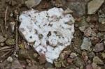 Cedar Glades Park Blue Trail Heart Rock Valentine