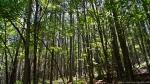 Cedar Glades Park Black Trail Spring