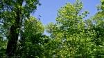 Cedar Glades Park Blue Trail Spring