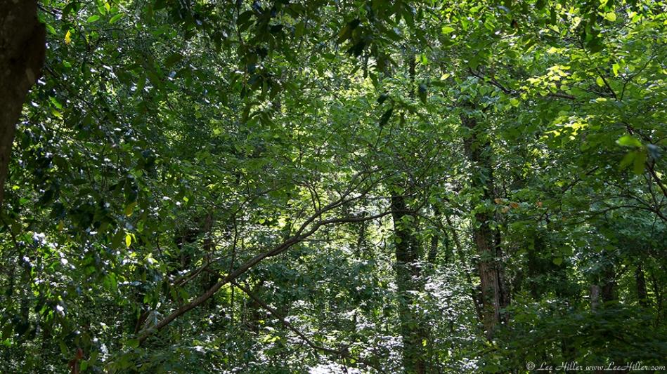 HSNP Promenade Forest