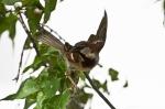 HSNP Promenade Male House Sparrow