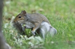 HSNP Fountain Trail Squirrel in Motion