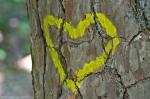 HSNP Hot Springs Mt Trail Heart Graffiti