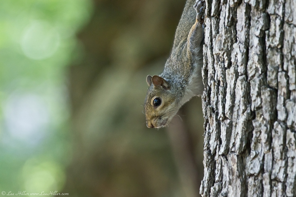 HSNP Fountain Trail Squirrel Watching