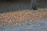 HSNP Carriage Road Fallen Leaves