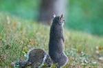 HSNP Fountain Trail Baby Squirrel