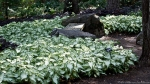 Garvan Woodland Gardens Arkansas Unidentified Leafy Plants