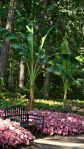 Garvan Woodland Gardens Arkansas Bench in Caladium