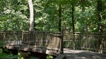 Garvan Woodland Gardens Arkansas Canopy Bridge