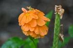 Garvan Woodland Gardens Arkansas Unidentified Flower