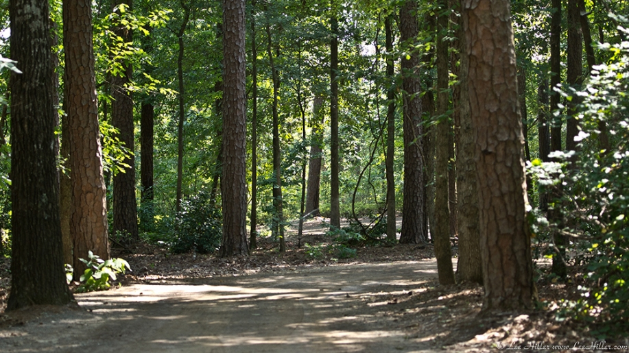 Garvan Woodland Gardens Arkansas Wooded Path
