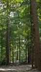 Garvan Woodland Gardens Arkansas Wooded Path