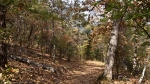 HSNP Floral Trail Summer