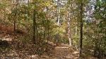 HSNP Honeysuckle Trail Summer