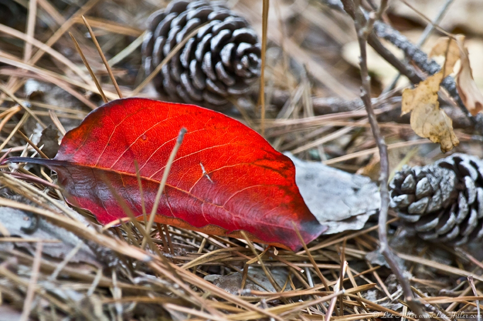 HSNP Hot Springs Mountain Trail Summer Red Leaf