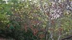 HSNP Tufa Terrace Trail Tree