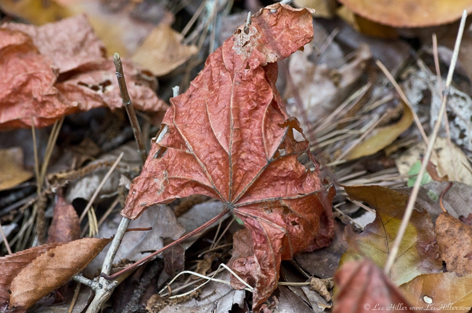 HSNP Hot Springs Mountain Trail Died Leaves