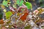 HSNP Upper Dogwood Trail Dried Leaves
