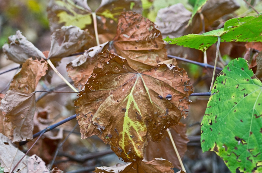 HSNP Upper Dogwood Trail Dried Leaves