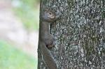HSNP Fountain St Lawn Baby Squirrel