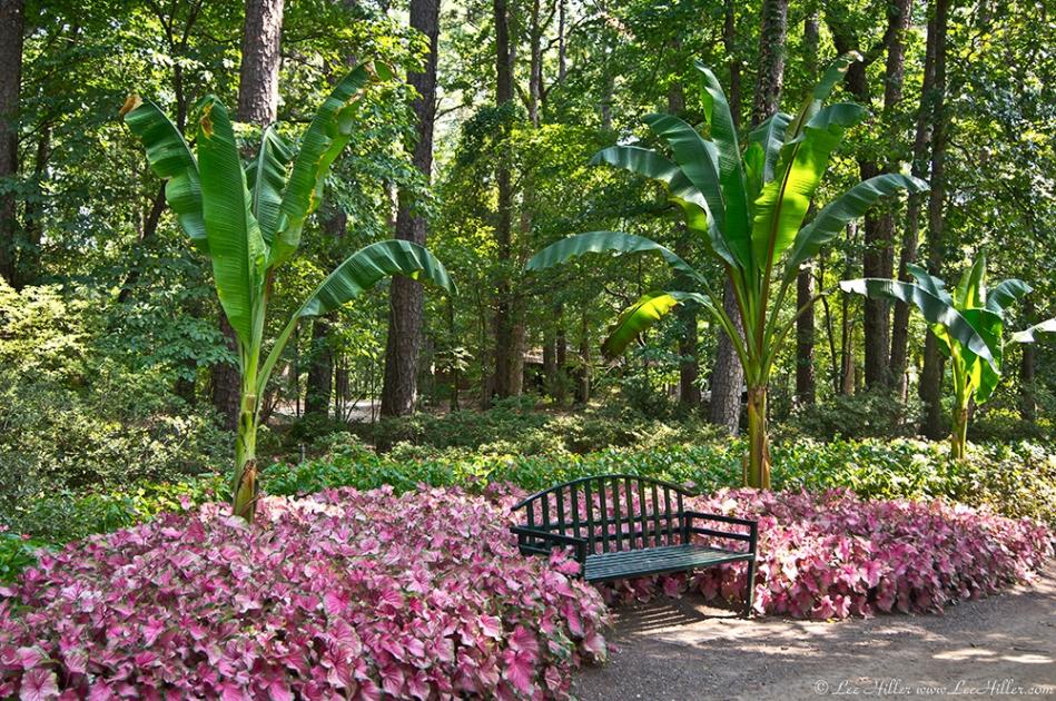 Garvan Woodland Gardens Camellia Trail