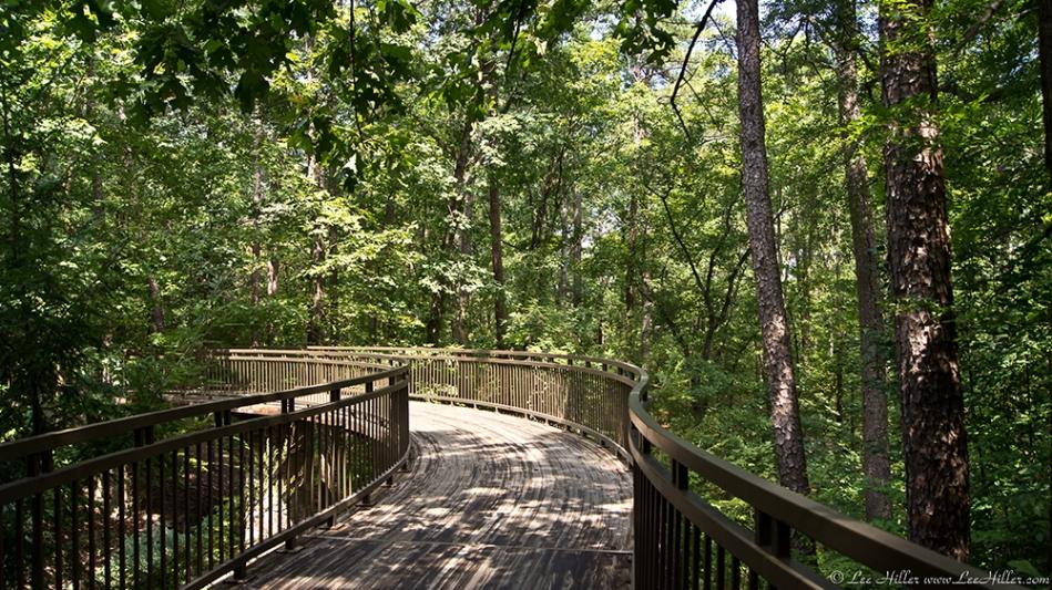 Garvan Woodland Gardens Millsap Canopy Bridge